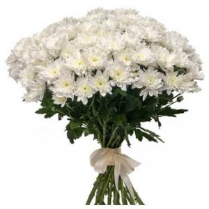 21 белая хризантема