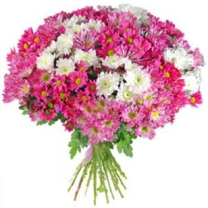 21 розовая хризантема